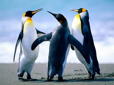 1510141135_penguins.jpg