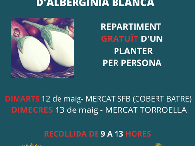 L'Ajuntament de Sant Fruitós de Bages repartirà planter d'albergínia blanca per tal de recuperar aquest cultiu