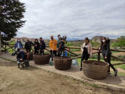 Plantada de ceps autòctons a l'entrada del Museu Municipal de la Vinya i el Vi
